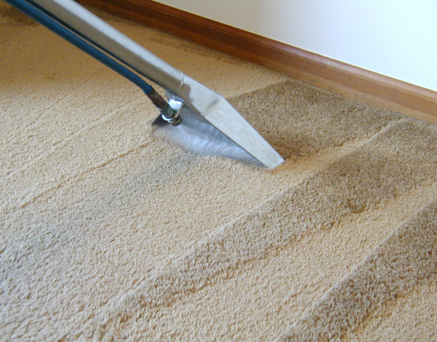 Green Rug Cleaning Services – Top Of blogs