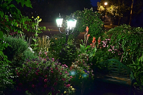 how-to-create-your-own-night-garden-picture2